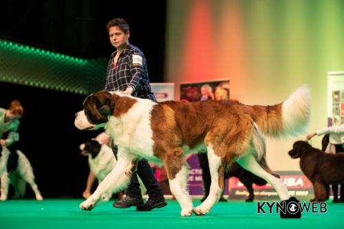 Branko Top Dog 2018 BIG 2 II